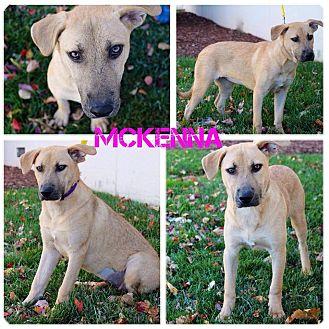 Great Dane/German Shepherd Dog Mix Puppy for adoption in Garden City, Michigan - McKenna