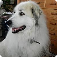 Adopt A Pet :: Annie - Minneapolis, MN