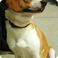Adopt A Pet :: Shiloh - Edisto Island, SC