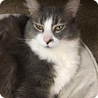 Adopt A Pet :: Billy - Medina, OH