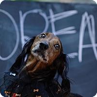 Adopt A Pet :: Doodle - Decatur, GA