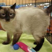 Adopt A Pet :: CEDRIC - Powder Springs, GA