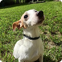 Adopt A Pet :: Dolly - Boca Raton, FL