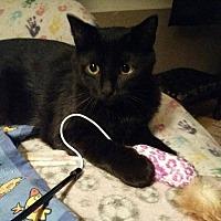 Adopt A Pet :: Jazz - Windom, MN
