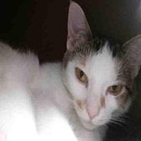 Adopt A Pet :: SARABI - Canfield, OH