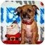 Photo 2 - Chihuahua/Chihuahua Mix Puppy for adoption in Broomfield, Colorado - Macabee