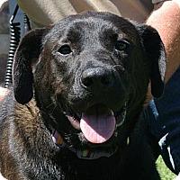 Adopt A Pet :: Hazel - white settlment, TX