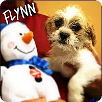 Adopt A Pet :: Flynn - Ogden, UT