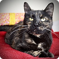 Adopt A Pet :: Macey - Xenia, OH