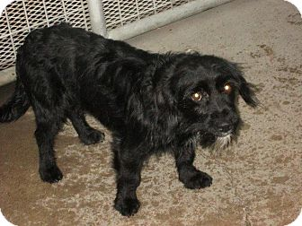 Terrier (Unknown Type, Small) Mix Dog for adoption in Manhattan, Kansas - Diddy