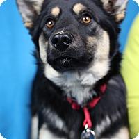 Adopt A Pet :: Reya - Minneapolis, MN