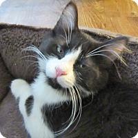 Adopt A Pet :: Captain - Davis, CA