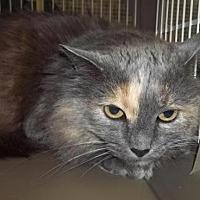 Adopt A Pet :: T.C. - Logan, UT