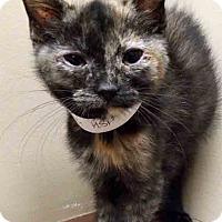 Adopt A Pet :: Bergetta - Oswego, IL