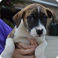 Adopt A Pet :: NESTA - Cranston, RI