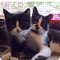 Adopt A Pet :: Nigel - Toronto, ON
