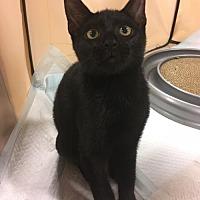 Adopt A Pet :: Dixon - Boynton Beach, FL