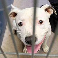 Adopt A Pet :: A3977053 - Phoenix, AZ