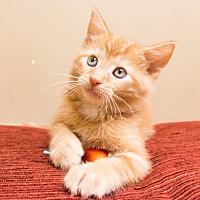 Adopt A Pet :: Dashi - Chicago, IL
