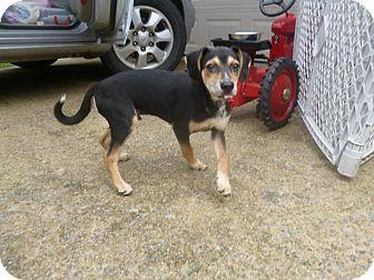 Hound (Unknown Type) Mix Puppy for adoption in Birmingham, Alabama - Chance