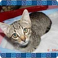 Adopt A Pet :: Bugsy - KANSAS, MO