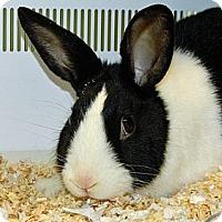 Adopt A Pet :: Dutch - Cheyenne, WY