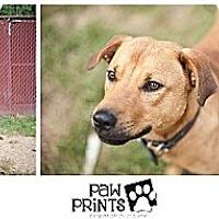 Adopt A Pet :: Ruskin - South Park, PA