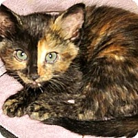 Adopt A Pet :: Dorothy - Escondido, CA