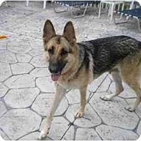 Adopt A Pet :: Honey - Green Cove Springs, FL