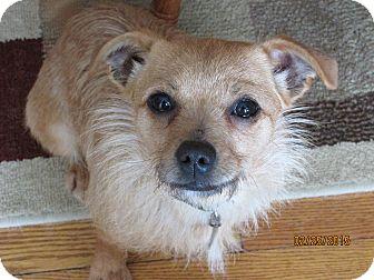 Chihuahua Mix Dog for adoption in Kalamazoo, Michigan - Mae Mae - Dennise