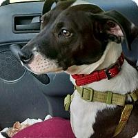 Adopt A Pet :: Baby Gigi - richmond, VA