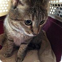 Adopt A Pet :: Charity - San Ramon, CA