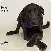 Adopt A Pet :: Julep - Baton Rouge, LA