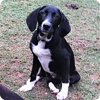 Adopt A Pet :: Gracie - North Brunswick, NJ