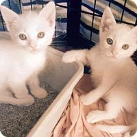 Adopt A Pet :: Casper - Pasadena, CA