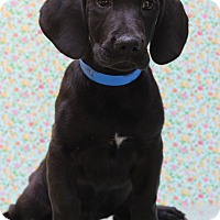 Adopt A Pet :: Tommy - Waldorf, MD