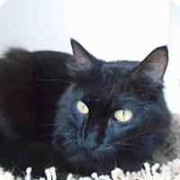 Adopt A Pet :: BAMBINO - Fairfield, CA