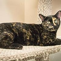 Adopt A Pet :: Patia - Georgetown, KY
