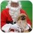 Photo 3 - Pekingese Mix Dog for adoption in Duluth, Georgia - Cookie
