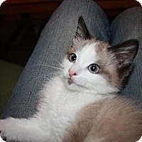 Adopt A Pet :: Oakley (LE) - Little Falls, NJ