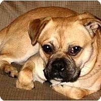 Adopt A Pet :: Teddy - Mays Landing, NJ
