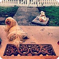 Adopt A Pet :: Peluchi - Santa Barbara, CA