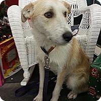 Adopt A Pet :: Rascal - Linton, IN