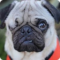 Adopt A Pet :: Willy - Pismo Beach, CA