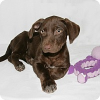 Adopt A Pet :: Princesa - Lufkin, TX