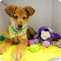 Adopt A Pet :: Ruby - Manning, SC