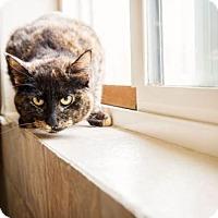 Adopt A Pet :: Antoinette - Washougal, WA