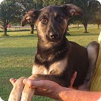 Adopt A Pet :: April - Greenville, RI