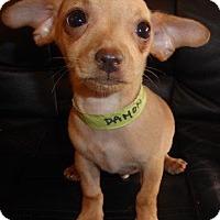 Adopt A Pet :: Damon - San Diego, CA