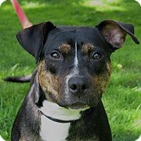 Adopt A Pet :: Moki - New Kensington, PA
